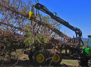 Professional Tree Removal New Smyrna Beach, FL